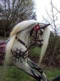Pictures of Rocking Horse Elite