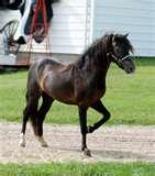 Brandy Rocking Horse Images