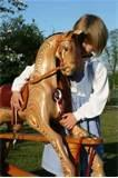 Photos of Wooden Rocking Horse Plans Free