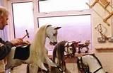 Rocking Horse Maker
