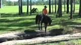 Pony Rocking Horse