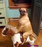 Pictures of Dog Rocking Horse